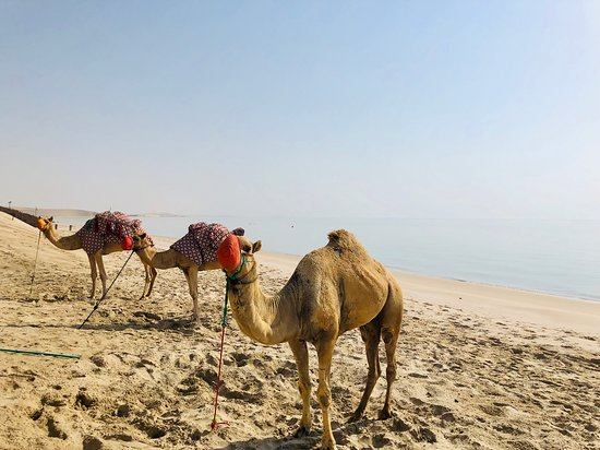 Desert Safari with Overnight Camping from Doha: Camel rides available