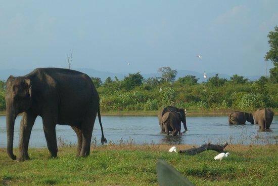 Ceylon Leisure Tours