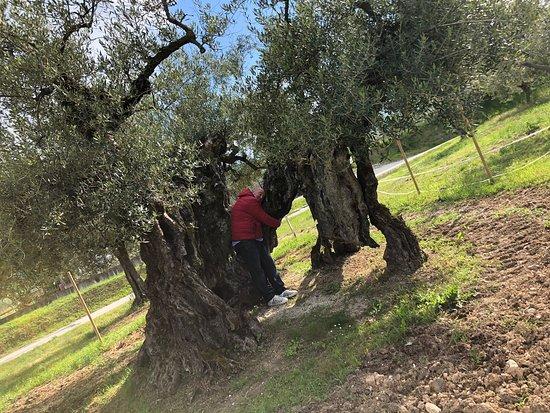 Amici in visita all'olivo di Macciano