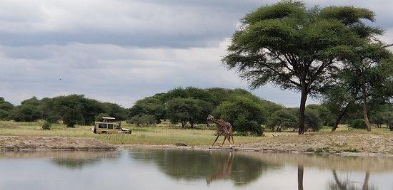 Tanzanya: Serengeti, Ngorongoro, and Tanganire National Park