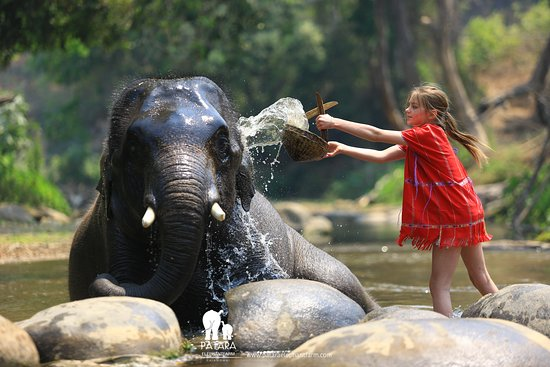 Patara Elephant Farm - Private Tours