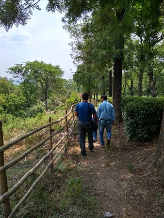 Wah Tea Estate: Walking along the nature trail. Roses, tulsi, chamomile, lemon grass etc is grown near here to be added to the teas.