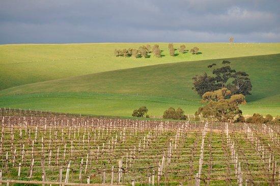 Winter vineyard views and the Barossa Ranges