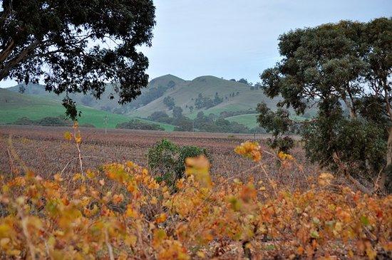 Views as you enter Liebichwein cellar door and autumn colours in the vineyard.