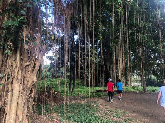 Excursión de medio día en bicicleta eléctrica por Ubud: The beautiful trees along our trip.