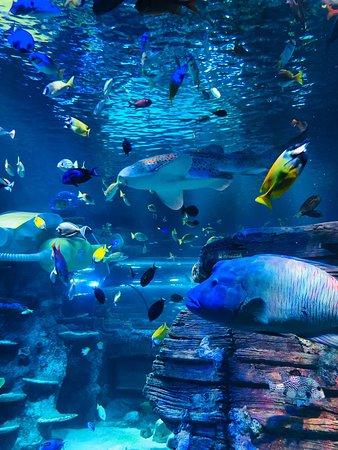 Legoland Sea Life