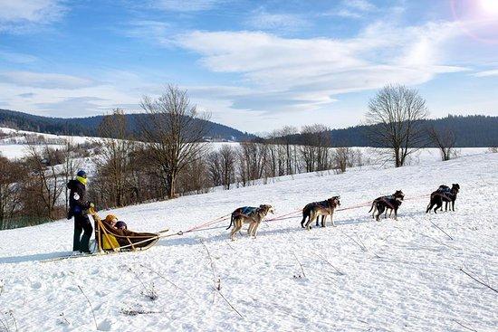 Psy na biegunach Rocking Dogs
