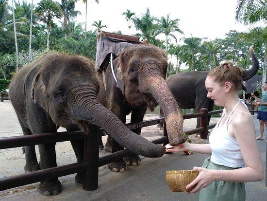 Bali Wonderful Tours