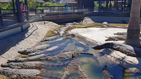 Crocodile Park 사진
