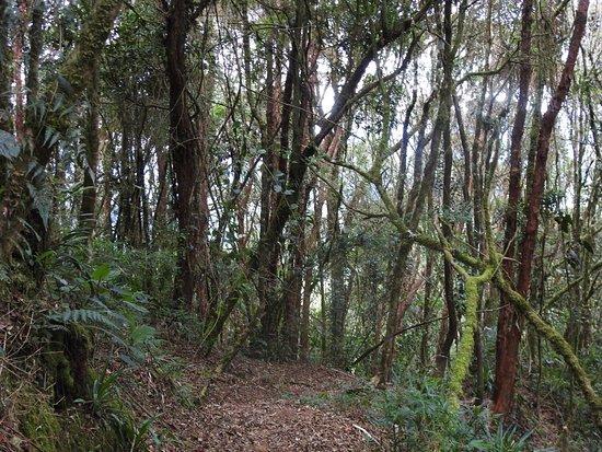 Urrao, קולומביה: Dusky Starfrontlet Bird Reserve