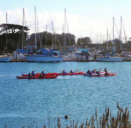 Moss Landing, CA: Kayak Connection Tour and seal photo-bomb.