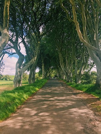 Giant's Causeway and Carrick-a-Rede Rope Bridge Day Trip from Dublin: The Dark Hedges