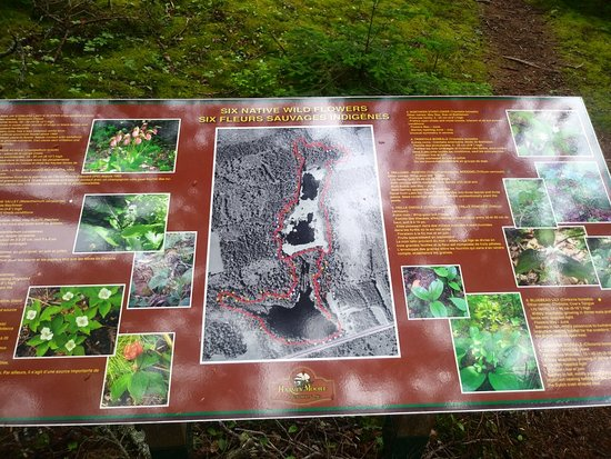 Harvey Moore Wildlife Sanctuary c/o SEA