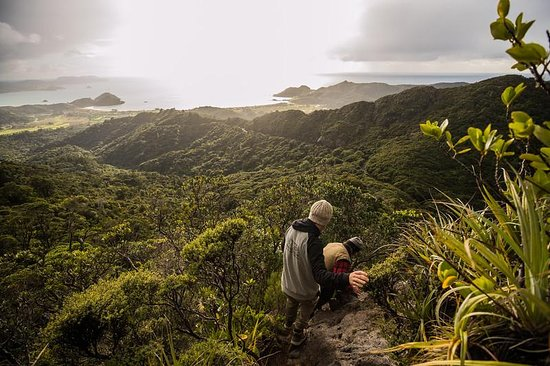 Great Barrier Island Photo