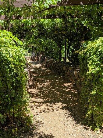 Page Spring Cellars Winery & Vineyards: White wine flight & vineyards