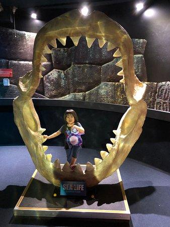 SEA LIFE Sunshine Coast Aquarium Entrance Ticket: Shark
