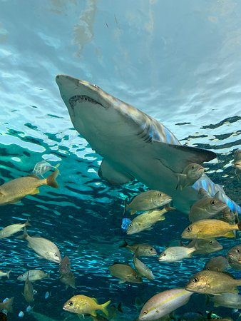 Skip the Line: Ripley's Aquarium of Canada Ticket in Toronto Photo