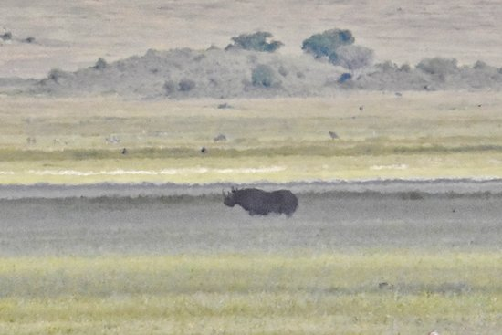 Ngorongoro Crater: rhino in the distance (about 1/2 mile) - taken with a high powered telephoto zoom lens
