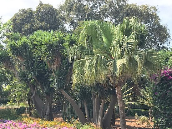 San Anton Gardens 사진