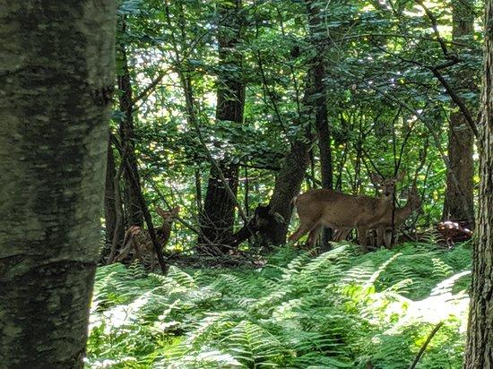 Omni Bedford Springs Resort: wildlife on the hike