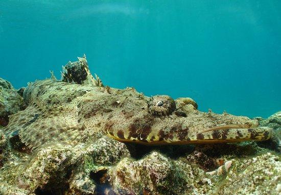 Crocodile fish.