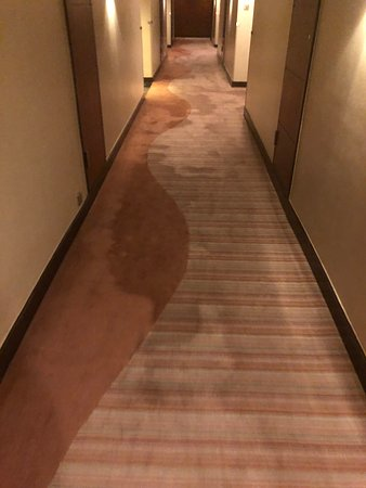 Great but filthy carpets