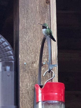 Crestone, Kolorado: Hummingbird central!