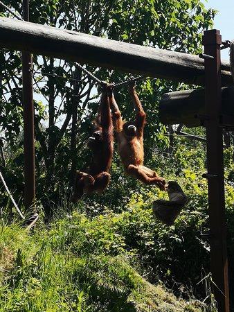 Jersey Zoo, happy animals, fantastic