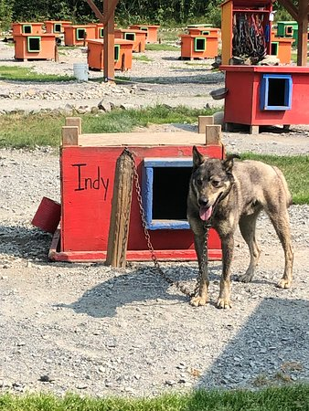 Dog sled tour great for families who love dogs!