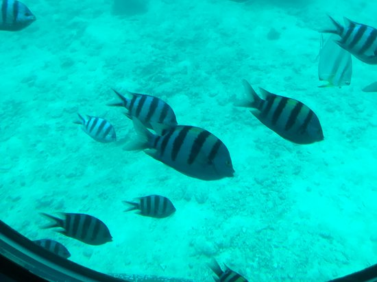 Sindbad Submarines (Hurghada) - 2019 All You Need to Know Before You