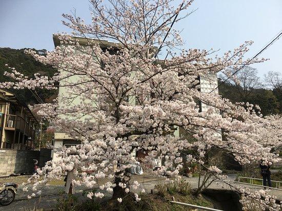Kyoto, Japan: Along the walk