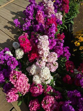 Ashikaga Flower Park Illumination Admission Ticket: Ashikaga Flower Park