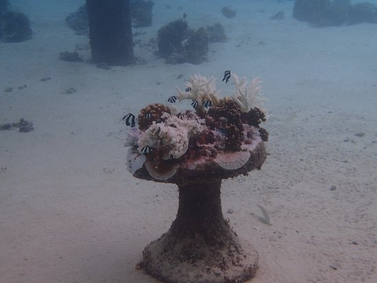 Hilton Moorea Lagoon Resort & Spa: Snorkeling under our bungalow