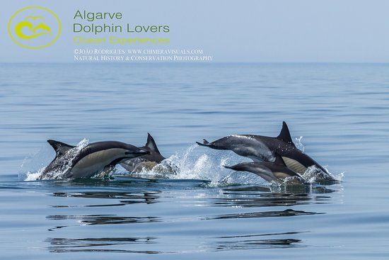 ‪Algarve Dolphin Lovers‬