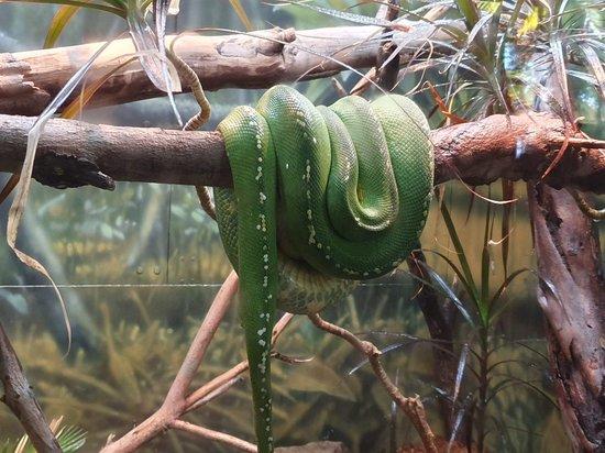 Valokuva: San Diego Zoo
