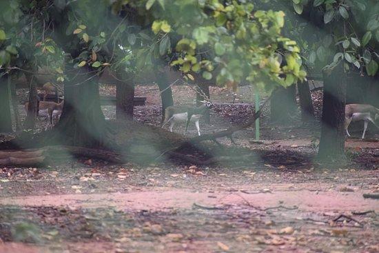 Birsa Zoological Park