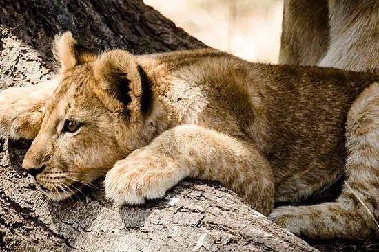 4 Días de Selous Safari: 4 Days Selous Safari