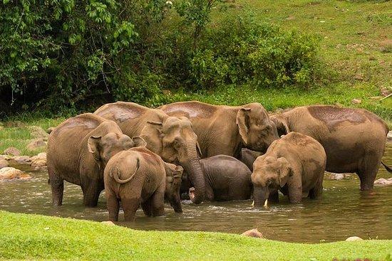 Wild Elephant Village (Anakulam...