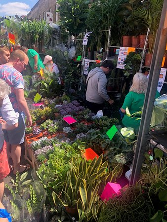 Columbia Road Flower Market: Herbs & Cactus