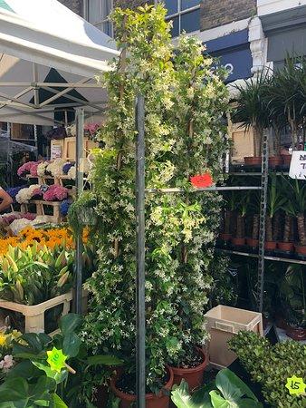 Columbia Road Flower Market: Jasmine