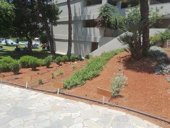 Dessole Malia Beach Hotel: bylinkova zahradka