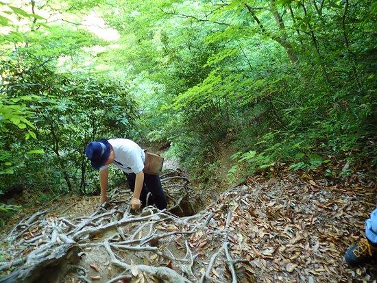 Mitokusan Sanbutuji Temple: 山道の様子。まだ初期段階でこの険しさです。鎖でなく木の根をつかんでますね。