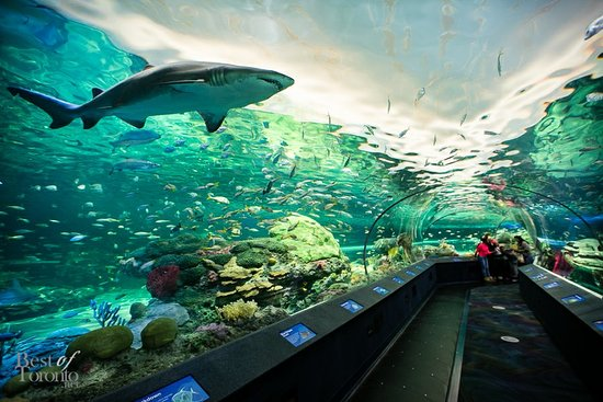 ‪Ripley's Aquarium of Canada‬