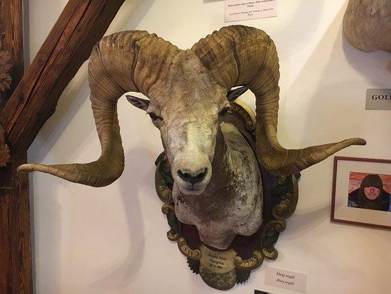 Erdeszeti Museum