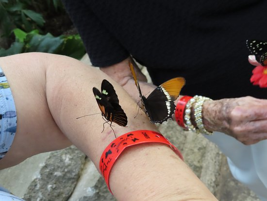 The Butterfly Palace: being loved on