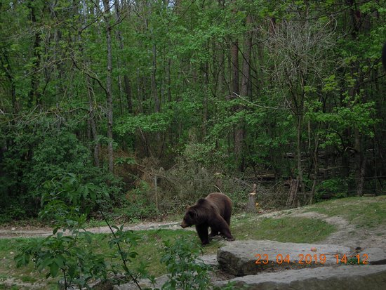 Wildpark Bad Mergentheim 사진