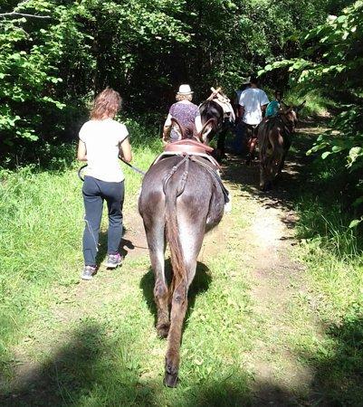 Auriac de Bourzac, Frankrike: Balade guidée avec des ânes