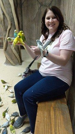 feeding parakeets
