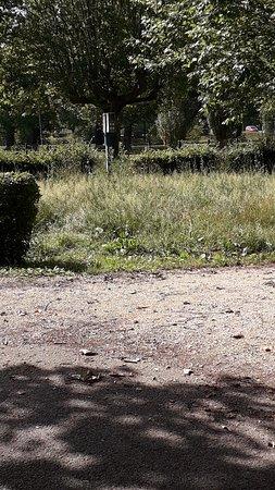 Thoissey, فرنسا: De visite. Au camping val de Saône  à thoissey  dans l'Ain  C est un camping 3 étoiles  !!!! Nous voulions y passer des vacances  nous avons fuit
