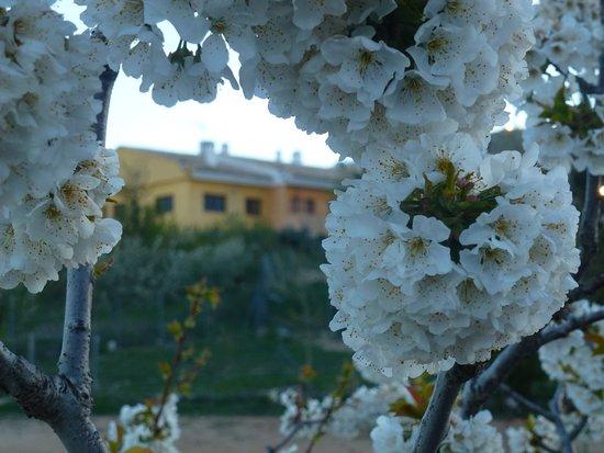 Inazares, สเปน: La floración del cerezo como ventana para ver nuestras casas